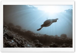 Sea Turtle Swimming HD Wide Wallpaper for Widescreen