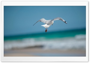 Seagull HD Wide Wallpaper for Widescreen