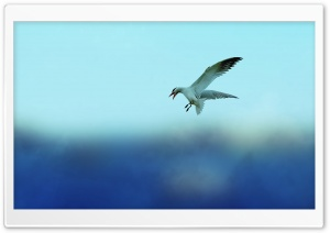 Seagull HD Wide Wallpaper for 4K UHD Widescreen desktop & smartphone