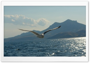 Seagull Above Lake HD Wide Wallpaper for Widescreen