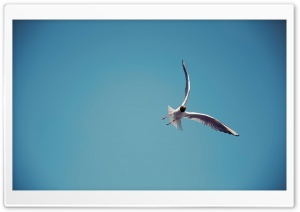 Seagull Flight HD Wide Wallpaper for Widescreen