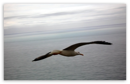 Seagull Flying Over The Sea HD wallpaper for Wide 16:10 5:3 Widescreen WHXGA WQXGA WUXGA WXGA WGA ; HD 16:9 High Definition WQHD QWXGA 1080p 900p 720p QHD nHD ; Standard 4:3 5:4 3:2 Fullscreen UXGA XGA SVGA QSXGA SXGA DVGA HVGA HQVGA devices ( Apple PowerBook G4 iPhone 4 3G 3GS iPod Touch ) ; iPad 1/2/Mini ; Mobile 4:3 5:3 3:2 16:9 5:4 - UXGA XGA SVGA WGA DVGA HVGA HQVGA devices ( Apple PowerBook G4 iPhone 4 3G 3GS iPod Touch ) WQHD QWXGA 1080p 900p 720p QHD nHD QSXGA SXGA ; Dual 16:10 5:3 16:9 4:3 5:4 WHXGA WQXGA WUXGA WXGA WGA WQHD QWXGA 1080p 900p 720p QHD nHD UXGA XGA SVGA QSXGA SXGA ;