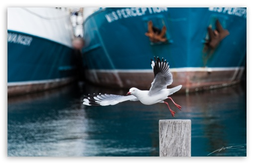Seagull, Fremantle ❤ 4K UHD Wallpaper for Wide 16:10 5:3 Widescreen WHXGA WQXGA WUXGA WXGA WGA ; 4K UHD 16:9 Ultra High Definition 2160p 1440p 1080p 900p 720p ; Standard 4:3 5:4 3:2 Fullscreen UXGA XGA SVGA QSXGA SXGA DVGA HVGA HQVGA ( Apple PowerBook G4 iPhone 4 3G 3GS iPod Touch ) ; Tablet 1:1 ; iPad 1/2/Mini ; Mobile 4:3 5:3 3:2 16:9 5:4 - UXGA XGA SVGA WGA DVGA HVGA HQVGA ( Apple PowerBook G4 iPhone 4 3G 3GS iPod Touch ) 2160p 1440p 1080p 900p 720p QSXGA SXGA ;