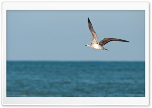 Seagull In Morocco HD Wide Wallpaper for Widescreen