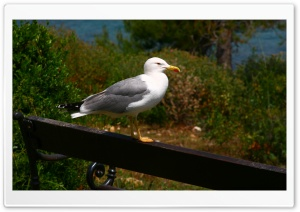 Seagull On A Bench HD Wide Wallpaper for Widescreen