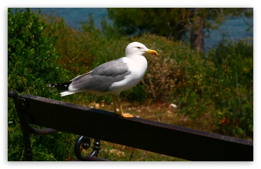 Seagull On A Bench HD wallpaper for Wide 16:10 5:3 Widescreen WHXGA WQXGA WUXGA WXGA WGA ; HD 16:9 High Definition WQHD QWXGA 1080p 900p 720p QHD nHD ; UHD 16:9 WQHD QWXGA 1080p 900p 720p QHD nHD ; Standard 4:3 5:4 3:2 Fullscreen UXGA XGA SVGA QSXGA SXGA DVGA HVGA HQVGA devices ( Apple PowerBook G4 iPhone 4 3G 3GS iPod Touch ) ; Tablet 1:1 ; iPad 1/2/Mini ; Mobile 4:3 5:3 3:2 16:9 5:4 - UXGA XGA SVGA WGA DVGA HVGA HQVGA devices ( Apple PowerBook G4 iPhone 4 3G 3GS iPod Touch ) WQHD QWXGA 1080p 900p 720p QHD nHD QSXGA SXGA ; Dual 4:3 5:4 UXGA XGA SVGA QSXGA SXGA ;