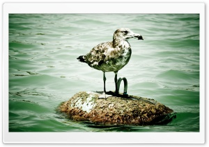 Seagull On A Buoy HD Wide Wallpaper for Widescreen