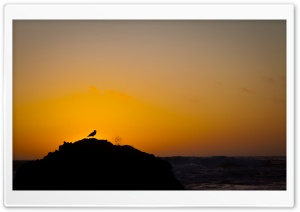 Seagull On A Rock HD Wide Wallpaper for Widescreen