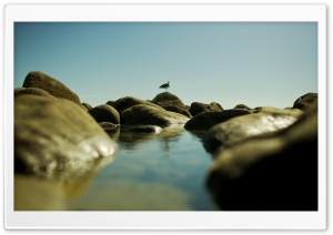 Seagull On The Rocks HD Wide Wallpaper for Widescreen
