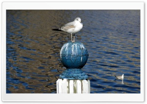 Seagull Standing On A Pole HD Wide Wallpaper for Widescreen