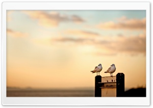 Seagulls HD Wide Wallpaper for Widescreen
