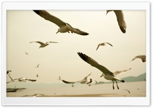 Seagulls Flying On The Beach