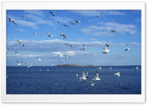 Seagulls In Flight HD Wide Wallpaper for Widescreen