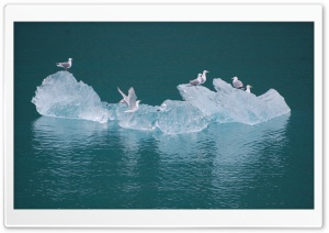 Seagulls on an Iceberg HD Wide Wallpaper for Widescreen