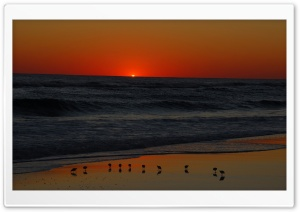 Seagulls On Beach At Sunset HD Wide Wallpaper for 4K UHD Widescreen desktop & smartphone