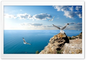 Seagulls On Rock HD Wide Wallpaper for Widescreen