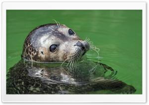Seal in the Water Ultra HD Wallpaper for 4K UHD Widescreen desktop, tablet & smartphone