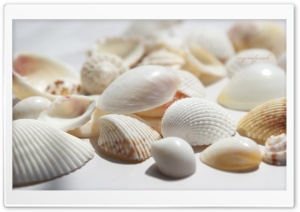 Seashells HD Wide Wallpaper for Widescreen