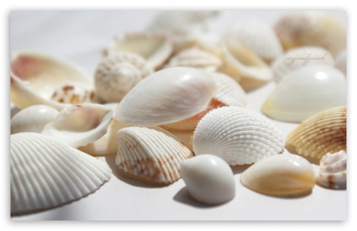 Seashells HD wallpaper for Wide 16:10 5:3 Widescreen WHXGA WQXGA WUXGA WXGA WGA ; HD 16:9 High Definition WQHD QWXGA 1080p 900p 720p QHD nHD ; Standard 4:3 5:4 3:2 Fullscreen UXGA XGA SVGA QSXGA SXGA DVGA HVGA HQVGA devices ( Apple PowerBook G4 iPhone 4 3G 3GS iPod Touch ) ; Tablet 1:1 ; iPad 1/2/Mini ; Mobile 4:3 5:3 3:2 16:9 5:4 - UXGA XGA SVGA WGA DVGA HVGA HQVGA devices ( Apple PowerBook G4 iPhone 4 3G 3GS iPod Touch ) WQHD QWXGA 1080p 900p 720p QHD nHD QSXGA SXGA ; Dual 16:10 5:3 16:9 4:3 5:4 WHXGA WQXGA WUXGA WXGA WGA WQHD QWXGA 1080p 900p 720p QHD nHD UXGA XGA SVGA QSXGA SXGA ;