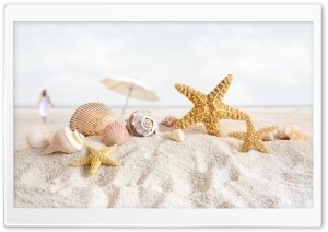 Seashells And Starfish On The Beach HD Wide Wallpaper for Widescreen