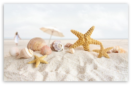 Seashells And Starfish On The Beach HD wallpaper for Wide 16:10 5:3 Widescreen WHXGA WQXGA WUXGA WXGA WGA ; HD 16:9 High Definition WQHD QWXGA 1080p 900p 720p QHD nHD ; UHD 16:9 WQHD QWXGA 1080p 900p 720p QHD nHD ; Standard 4:3 5:4 3:2 Fullscreen UXGA XGA SVGA QSXGA SXGA DVGA HVGA HQVGA devices ( Apple PowerBook G4 iPhone 4 3G 3GS iPod Touch ) ; iPad 1/2/Mini ; Mobile 4:3 5:3 3:2 16:9 5:4 - UXGA XGA SVGA WGA DVGA HVGA HQVGA devices ( Apple PowerBook G4 iPhone 4 3G 3GS iPod Touch ) WQHD QWXGA 1080p 900p 720p QHD nHD QSXGA SXGA ; Dual 4:3 5:4 UXGA XGA SVGA QSXGA SXGA ;