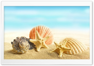 Seashells and Stars HD Wide Wallpaper for Widescreen