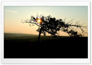 See The Sun Through The Branches Of A Tree HD Wide Wallpaper for Widescreen