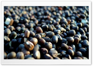 Seeds Macro HD Wide Wallpaper for 4K UHD Widescreen desktop & smartphone