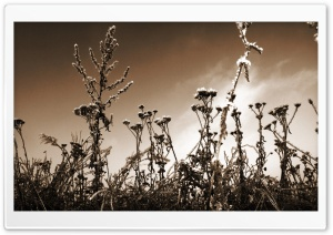 Sepia Wildflowers HD Wide Wallpaper for Widescreen