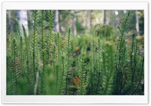 Serenity HD Wide Wallpaper for 4K UHD Widescreen desktop & smartphone