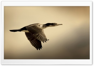 Shag Bird HD Wide Wallpaper for Widescreen