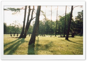 Shamanka Forest (Vintage Photography) HD Wide Wallpaper for Widescreen