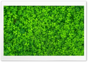 Shamrock HD Wide Wallpaper for Widescreen