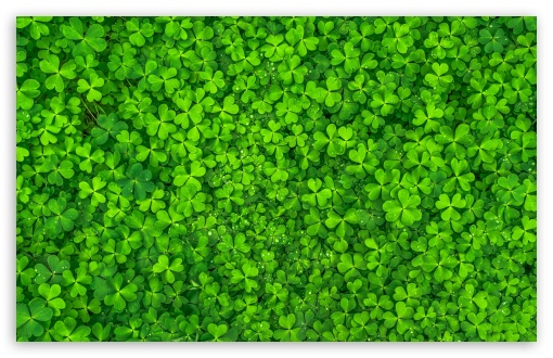 Shamrock UltraHD Wallpaper for Wide 16:10 5:3 Widescreen WHXGA WQXGA WUXGA WXGA WGA ; UltraWide 21:9 ; 8K UHD TV 16:9 Ultra High Definition 2160p 1440p 1080p 900p 720p ; Standard 4:3 5:4 3:2 Fullscreen UXGA XGA SVGA QSXGA SXGA DVGA HVGA HQVGA ( Apple PowerBook G4 iPhone 4 3G 3GS iPod Touch ) ; Smartphone 16:9 3:2 5:3 2160p 1440p 1080p 900p 720p DVGA HVGA HQVGA ( Apple PowerBook G4 iPhone 4 3G 3GS iPod Touch ) WGA ; Tablet 1:1 ; iPad 1/2/Mini ; Mobile 4:3 5:3 3:2 16:9 5:4 - UXGA XGA SVGA WGA DVGA HVGA HQVGA ( Apple PowerBook G4 iPhone 4 3G 3GS iPod Touch ) 2160p 1440p 1080p 900p 720p QSXGA SXGA ; Dual 16:10 5:3 4:3 5:4 3:2 WHXGA WQXGA WUXGA WXGA WGA UXGA XGA SVGA QSXGA SXGA DVGA HVGA HQVGA ( Apple PowerBook G4 iPhone 4 3G 3GS iPod Touch ) ;