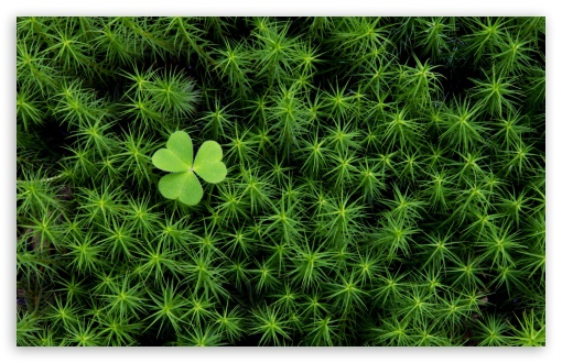 Shamrock And Irish Moss HD wallpaper for Wide 16:10 5:3 Widescreen WHXGA WQXGA WUXGA WXGA WGA ; HD 16:9 High Definition WQHD QWXGA 1080p 900p 720p QHD nHD ; Standard 4:3 5:4 3:2 Fullscreen UXGA XGA SVGA QSXGA SXGA DVGA HVGA HQVGA devices ( Apple PowerBook G4 iPhone 4 3G 3GS iPod Touch ) ; Tablet 1:1 ; iPad 1/2/Mini ; Mobile 4:3 5:3 3:2 16:9 5:4 - UXGA XGA SVGA WGA DVGA HVGA HQVGA devices ( Apple PowerBook G4 iPhone 4 3G 3GS iPod Touch ) WQHD QWXGA 1080p 900p 720p QHD nHD QSXGA SXGA ;