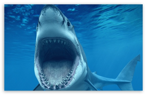 Download Shark Attack Underwater HD Wallpaper
