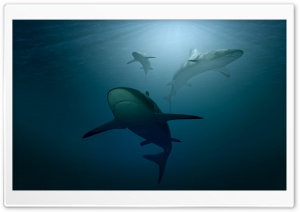 Sharks 3D HD Wide Wallpaper for 4K UHD Widescreen desktop & smartphone