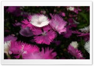Sharp Shapes Soft Colors Ultra HD Wallpaper for 4K UHD Widescreen desktop, tablet & smartphone