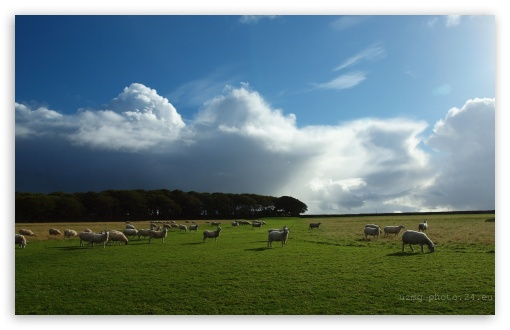 Sheep Grazing HD wallpaper for Wide 16:10 5:3 Widescreen WHXGA WQXGA WUXGA WXGA WGA ; HD 16:9 High Definition WQHD QWXGA 1080p 900p 720p QHD nHD ; Standard 4:3 5:4 3:2 Fullscreen UXGA XGA SVGA QSXGA SXGA DVGA HVGA HQVGA devices ( Apple PowerBook G4 iPhone 4 3G 3GS iPod Touch ) ; Tablet 1:1 ; iPad 1/2/Mini ; Mobile 4:3 5:3 3:2 16:9 5:4 - UXGA XGA SVGA WGA DVGA HVGA HQVGA devices ( Apple PowerBook G4 iPhone 4 3G 3GS iPod Touch ) WQHD QWXGA 1080p 900p 720p QHD nHD QSXGA SXGA ;