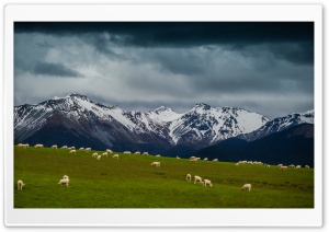 Sheep On Mountain Pasture HD Wide Wallpaper for 4K UHD Widescreen desktop & smartphone