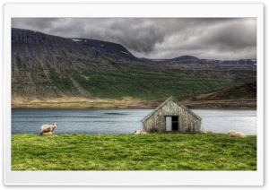 Sheepfold HD Wide Wallpaper for Widescreen