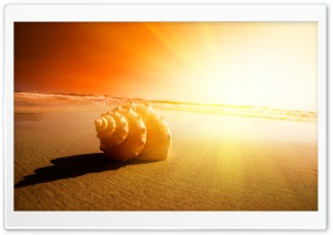 Shell On The Beach HD Wide Wallpaper for Widescreen