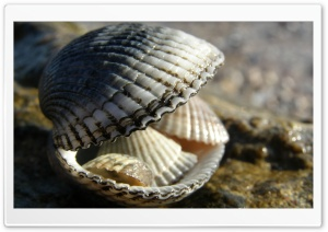 Shells HD Wide Wallpaper for Widescreen