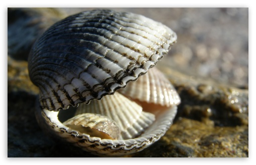 Shells HD wallpaper for Wide 16:10 Widescreen WHXGA WQXGA WUXGA WXGA ; HD 16:9 High Definition WQHD QWXGA 1080p 900p 720p QHD nHD ; Standard 4:3 5:4 3:2 Fullscreen UXGA XGA SVGA QSXGA SXGA DVGA HVGA HQVGA devices ( Apple PowerBook G4 iPhone 4 3G 3GS iPod Touch ) ; Tablet 1:1 ; iPad 1/2/Mini ; Mobile 4:3 3:2 5:4 - UXGA XGA SVGA DVGA HVGA HQVGA devices ( Apple PowerBook G4 iPhone 4 3G 3GS iPod Touch ) QSXGA SXGA ;