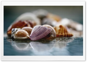 Shells Macro HD Wide Wallpaper for 4K UHD Widescreen desktop & smartphone