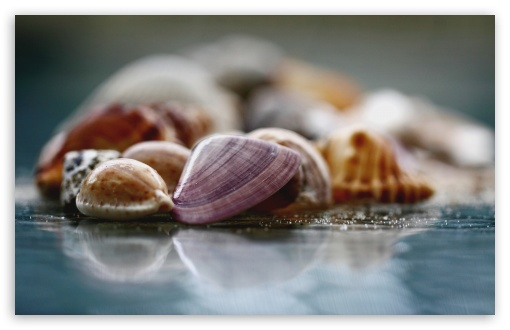 Shells Macro ❤ 4K UHD Wallpaper for Wide 16:10 5:3 Widescreen WHXGA WQXGA WUXGA WXGA WGA ; 4K UHD 16:9 Ultra High Definition 2160p 1440p 1080p 900p 720p ; Standard 4:3 5:4 3:2 Fullscreen UXGA XGA SVGA QSXGA SXGA DVGA HVGA HQVGA ( Apple PowerBook G4 iPhone 4 3G 3GS iPod Touch ) ; iPad 1/2/Mini ; Mobile 4:3 5:3 3:2 16:9 5:4 - UXGA XGA SVGA WGA DVGA HVGA HQVGA ( Apple PowerBook G4 iPhone 4 3G 3GS iPod Touch ) 2160p 1440p 1080p 900p 720p QSXGA SXGA ; Dual 16:10 5:3 16:9 4:3 5:4 WHXGA WQXGA WUXGA WXGA WGA 2160p 1440p 1080p 900p 720p UXGA XGA SVGA QSXGA SXGA ;