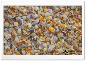 Shells on the Beach HD Wide Wallpaper for Widescreen