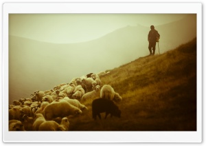 Shepherd HD Wide Wallpaper for 4K UHD Widescreen desktop & smartphone