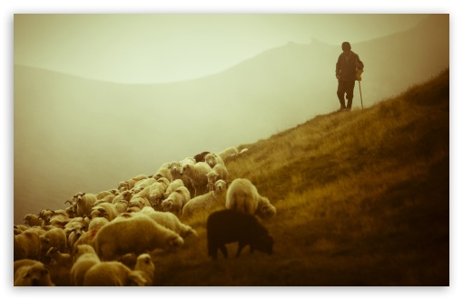 Shepherd HD wallpaper for Wide 16:10 5:3 Widescreen WHXGA WQXGA WUXGA WXGA WGA ; HD 16:9 High Definition WQHD QWXGA 1080p 900p 720p QHD nHD ; Standard 4:3 5:4 3:2 Fullscreen UXGA XGA SVGA QSXGA SXGA DVGA HVGA HQVGA devices ( Apple PowerBook G4 iPhone 4 3G 3GS iPod Touch ) ; Tablet 1:1 ; iPad 1/2/Mini ; Mobile 4:3 5:3 3:2 16:9 5:4 - UXGA XGA SVGA WGA DVGA HVGA HQVGA devices ( Apple PowerBook G4 iPhone 4 3G 3GS iPod Touch ) WQHD QWXGA 1080p 900p 720p QHD nHD QSXGA SXGA ;