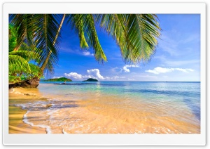 Shore Palms Tropical Beach HD Wide Wallpaper for 4K UHD Widescreen desktop & smartphone